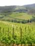 Weinabo-Abothek-Wein-Kistl-November-2020-Toscana-Italien-San-Donato-Rosso-2018-Mezzadria-shop_web