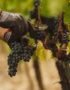 Weinabo-Abothek-Wein-Kistl-November-2020-Toscana-Italien-San-Donato-Rosso-2018-Sangiovese-shop_web