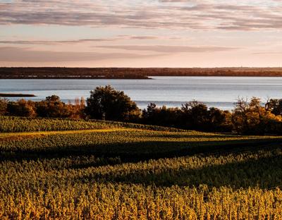 Weinabo-Abothek-November-2019-bordeaux-jongueyres-Les-Jongueyres-Panorama-Gironde-Blaye_web