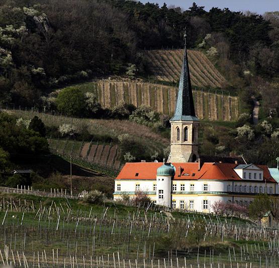 Abothek_Mai-Kistl_Pinot-Blanc_Gumpoldskirchen (© Karl Gruber, CC BY-SA 3.0)