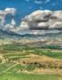 Abothek_Februar_Rioja-Briones_Emilio-García-from-Parla,-Spain-(Vinedos)-CC-BY-SA-2.0-(https-creativecommons.org-licensesby-sa2.0)-via-Wikimedia-Commons