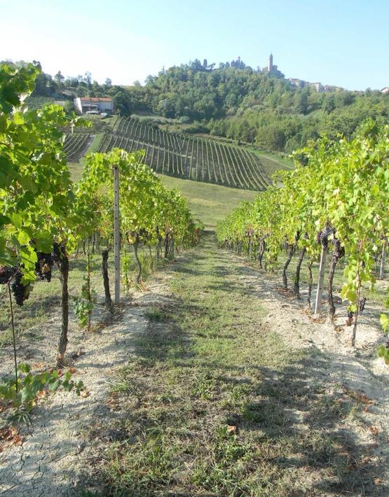 Weinabo-Abothek-Juni-Kistl-2018-Vignale-Weingarten-web