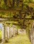 Weinabo-Abothek-September-Kistl-2018-Vinho-Verde-Pergolaerziehung-Thinkstock-web
