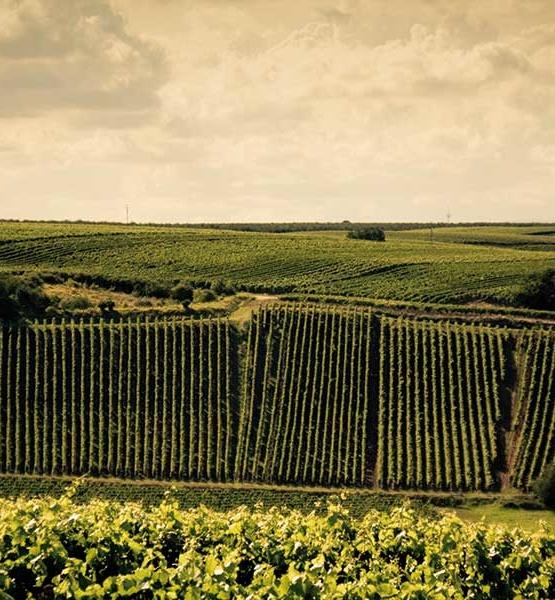 Weinabo-Abothek-Oktober-Kistl-2018-Rheinhessen-Weinversessen-Weingarten_web