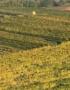 Weinabo-Abothek-Le-Baron-Chardonnay-a-la-Bourgogne-aus-Oesterreich-Hüterpoint