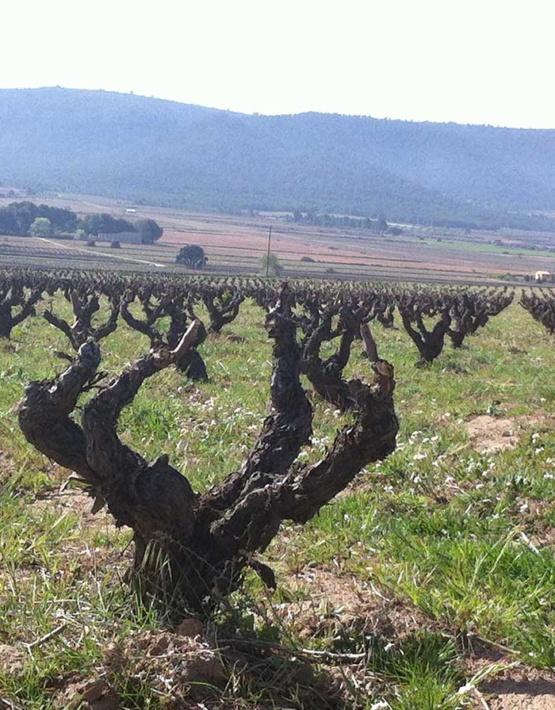 Weinabo-Abothek-Februar-Kistl-2019-Valencia-Weingarten_web