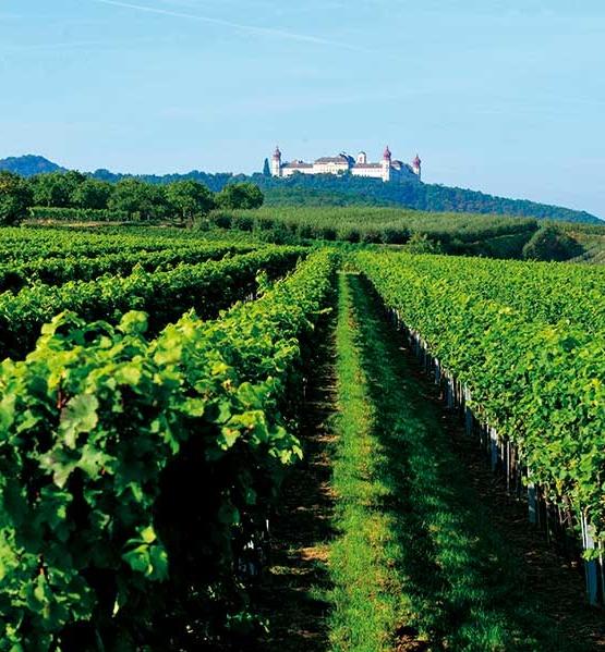 Weinabo-Abothek-April-Kistl-2019-Weinfruehling-Christian-Parzer-Goettweig-Weingarten-Foto-POV-web