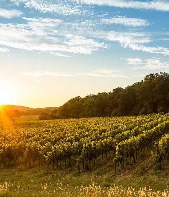 Weinabo-Abothek-Juni-2019-Ungarn-Balaton-Zelna-Sonnenuntergang-Weingarten-web