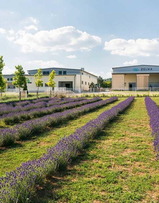 Weinabo-Abothek-Juni-2019-Ungarn-Balaton-Zelna-Weingut-Lavendel-web
