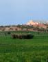 Weinabo-Abothek-September-2019-Sommerglueck-Apulien-Amastuola-Bianco-Salento-Fiano-Malvasia-Weingarten-Masseria-Vigneto-Giardino_web