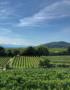 Weinabo-Abothek-Wein-Kistl-April-2020-Wetterkreuzberg-Weingut-Kathrin-Brachmann-Gruener-Veltliner-Alte-Reben-2018-Bild-Blick-Richtung-Alpen-552x707-shop_web