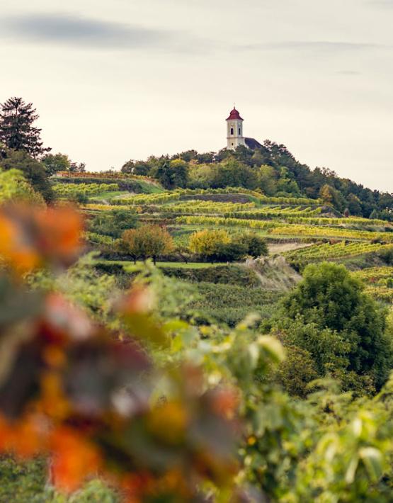 Weinabo-Abothek-Wein-Kistl-April-2020-Wetterkreuzberg-Weingut-Kathrin-Brachmann-Gruener-Veltliner-Alte-Reben-2018-Bild-Wetterkreuzkirche-579x741-shop_web