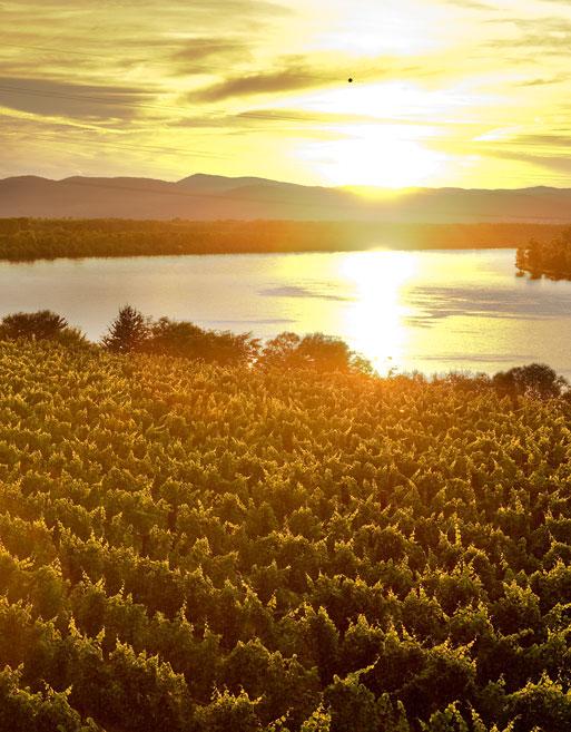 Weinabo-Abothek-Wein-Kistl-April-2020-Wetterkreuzberg-Weinhof-Birgit-Hoch-Cabernet-Sauvignon-Riede-Hahn-2016-Bild-Donau-513x657-shop_web
