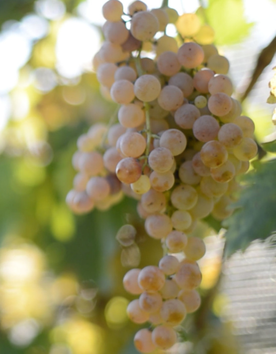 Weinabo-Abothek-Wein-Kistl-Juni-2020-Italia-si-frecce-tricolori-Verona-Italien-Fasoli-Gino-Borgoleto-Soave-DOC-2019-Garganege-Traube-shop_web