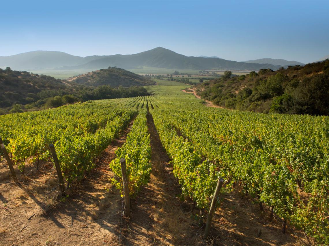 Weinabo-Abothek-Wein-Kistl-Sommer-2020-Weine-von-Welt-Suedafrika-Chile- Beitragsbild-1200x900