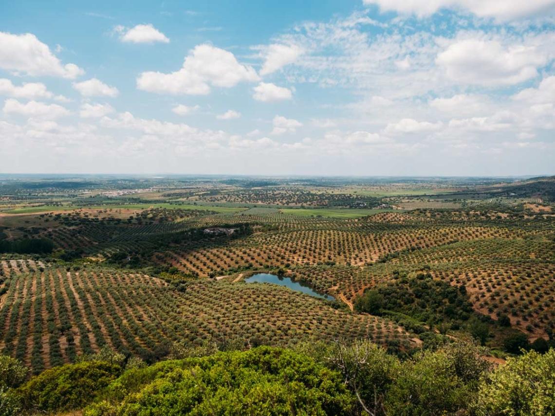 Weinabo-Abothek-Wein-Kistl-September-2020-Alentejo-Portugal_1200x900_web