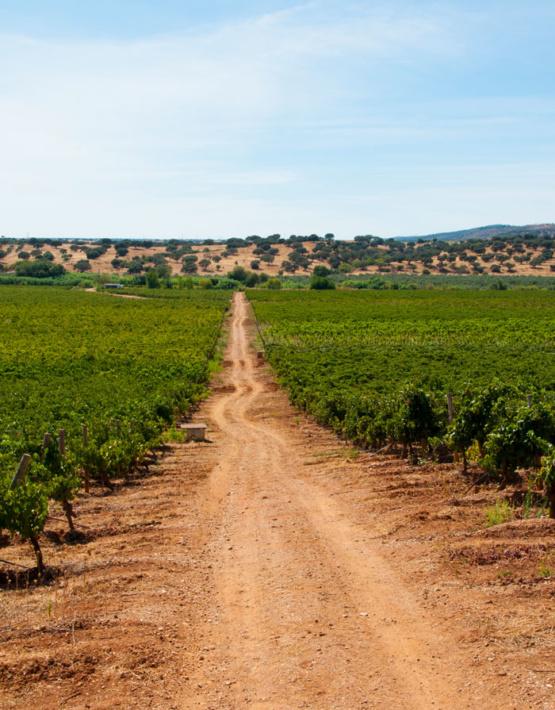 Weinabo-Abothek-Wein-Kistl-September-2020-der-Blick-zurueck-ins-Sommerglueck-Alentejo-Portugal-HMR-Pousio-Selection-Branco-2019-Bild-Weg-shop_web
