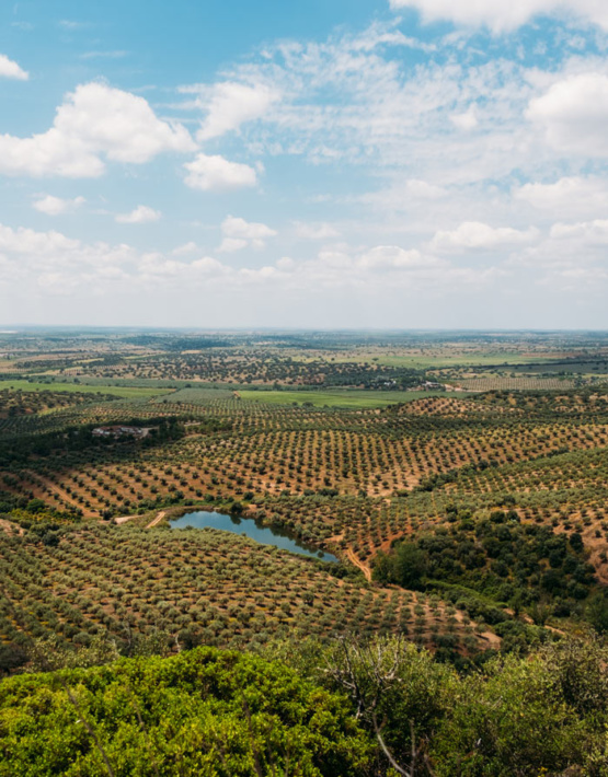 Weinabo-Abothek-Wein-Kistl-September-2020-der-Blick-zurueck-ins-Sommerglueck-Alentejo-Portugal-HMR-Pousio-Selection-Rose-2019-Bild-Landschaft-shop_web