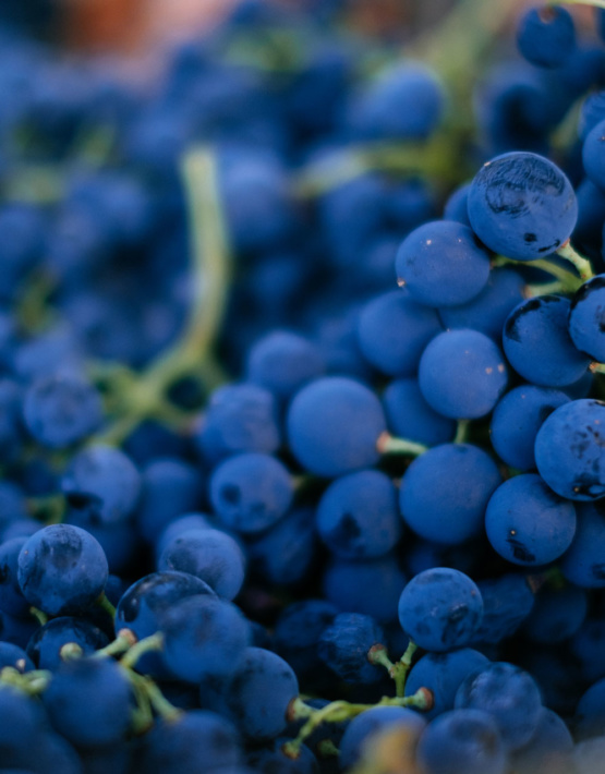 Weinabo-Abothek-Wein-Kistl-September-2020-der-Blick-zurueck-ins-Sommerglueck-Alentejo-Portugal-HMR-Pousio-Selection-Tinto-2017-Bild-Trauben-shop_web