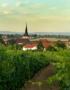 Weinabo-Abothek-Oktober-2020-Pfalz-Mario-Zelt-Riesling-2019-Laumersheim-shop_web