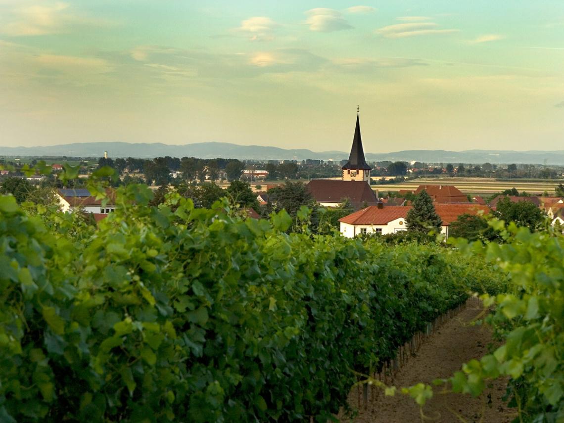 Weinabo-Abothek-Oktober-2020-Pfalz-Mario-Zelt-Laumersheim-shop_web