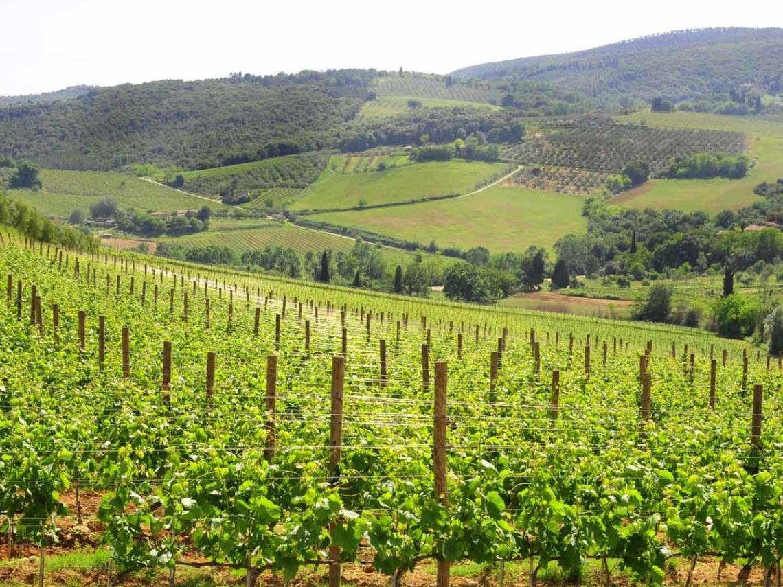 Weinabo-Abothek-Wein-Kistl-November-2020-Toscana-Italien-San-Donato-1200x900