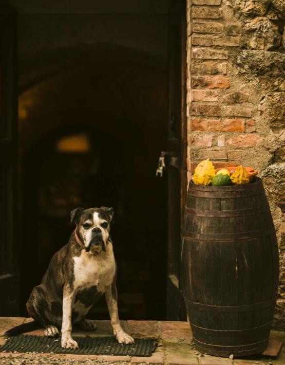 Weinabo-Abothek-Wein-Kistl-November-2020-Toscana-Italien-San-Donato-Chianti-Colli-Senesi-DOCG-2017-Hund-shop_web