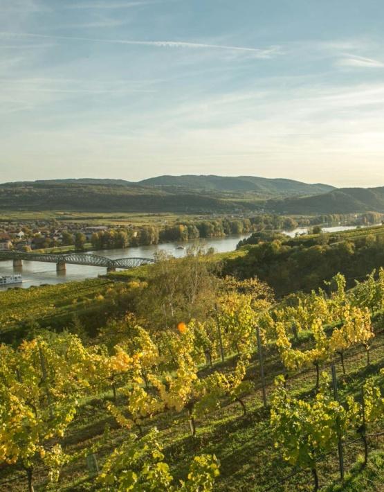 Weinabo-Abothek-Salomon-Undhof-Krems-Stein-Gruener-Veltliner-Hochterrassen-Weingarten-Foto-Florence-Steiger-web