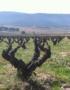 Weinabo-Abothek-Casa-los-Frailes-Valencia-Spanien-Monastrell-2019-Weingarten-web