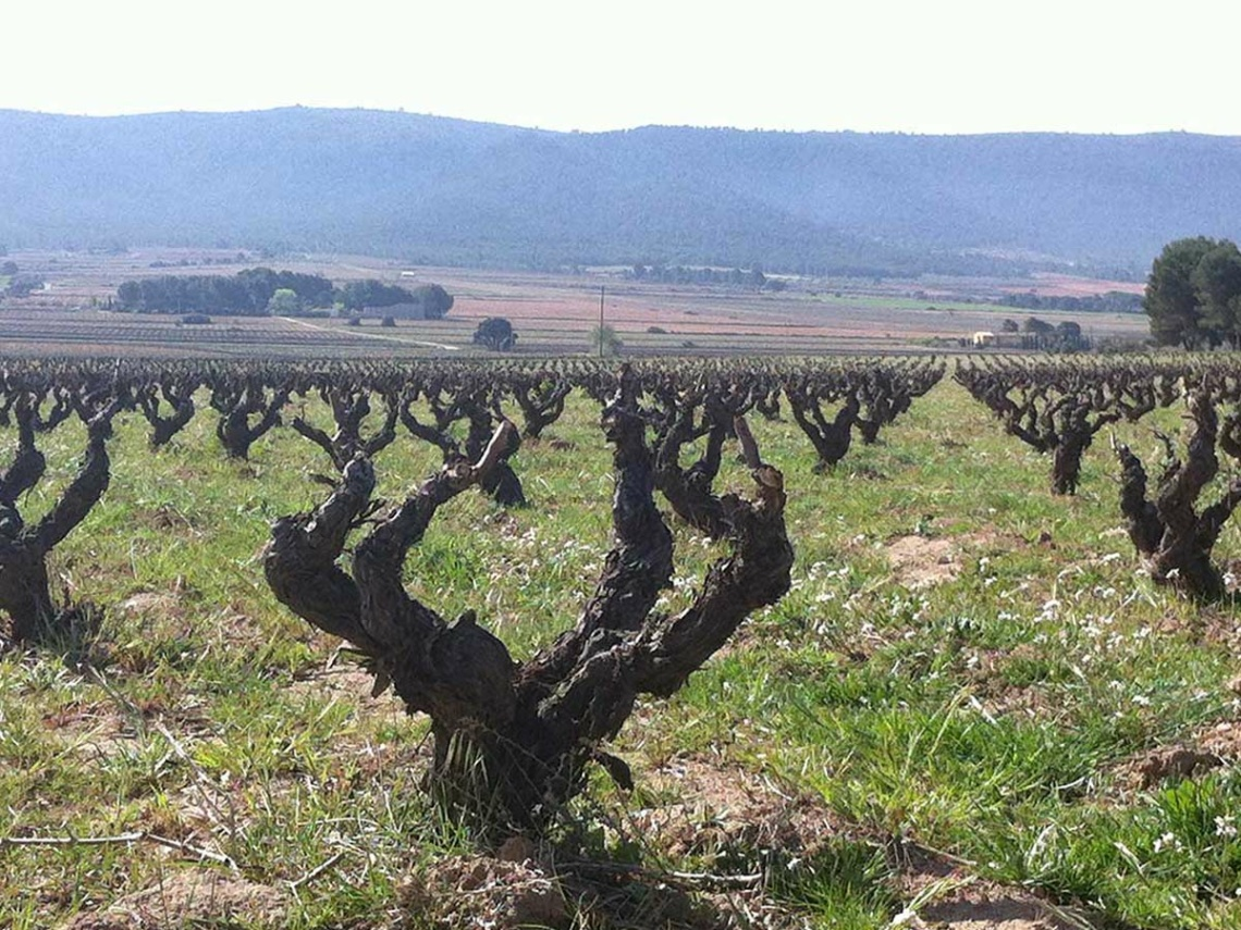 Weinabo-Abothek-Februar-Kistl-2021-Valencia-Weingarten_web