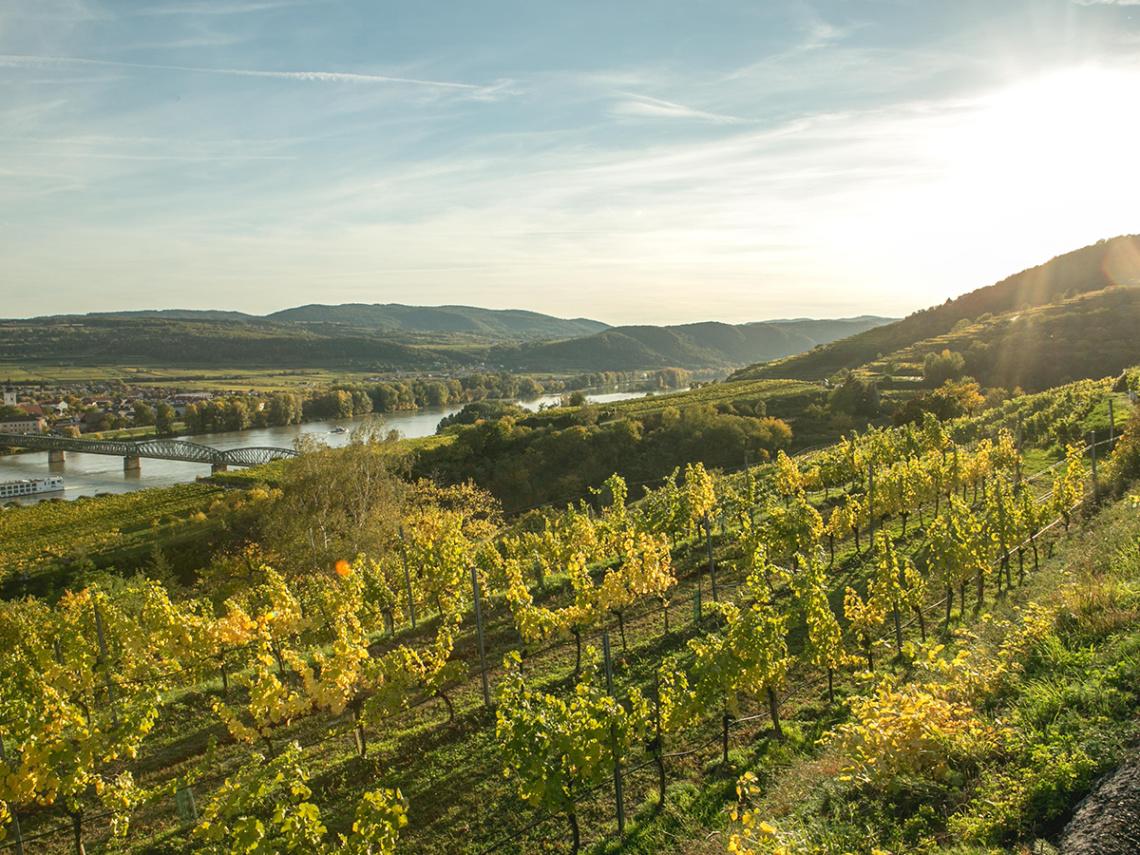Weinabo-Abothek-Salomon-Undhof-Krems-Beitrag_Bild_1200x900