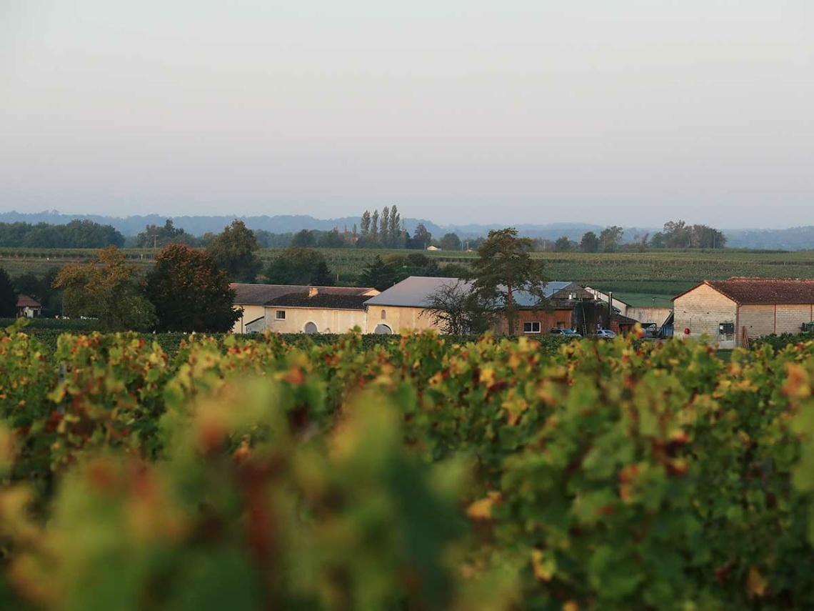 Weinabo-Abothek-Chateau-La-Freynelle-Entre-Deux-Mers-Bordeaux-Frankreich-Blanc-2019-Weingarten-Quelle-Guillaume-Bonnaud-4x3-web