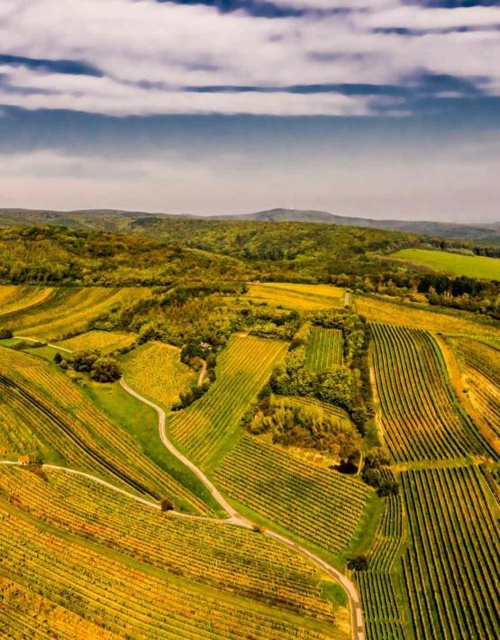 Weinabo-Abothek-Kracher-Mittelburgenland-Oesterreich-Blaufraenkisch-Reunion-Klassik-2018_OeWM_Robert-Herbst_weingebirge-web