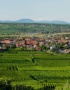 Weinabo-Abothek-Frankreich-Pfaffenheim-Elsass-Moltes-Gewuerztraminer-AOC-Alsace-2017-Panorama-web