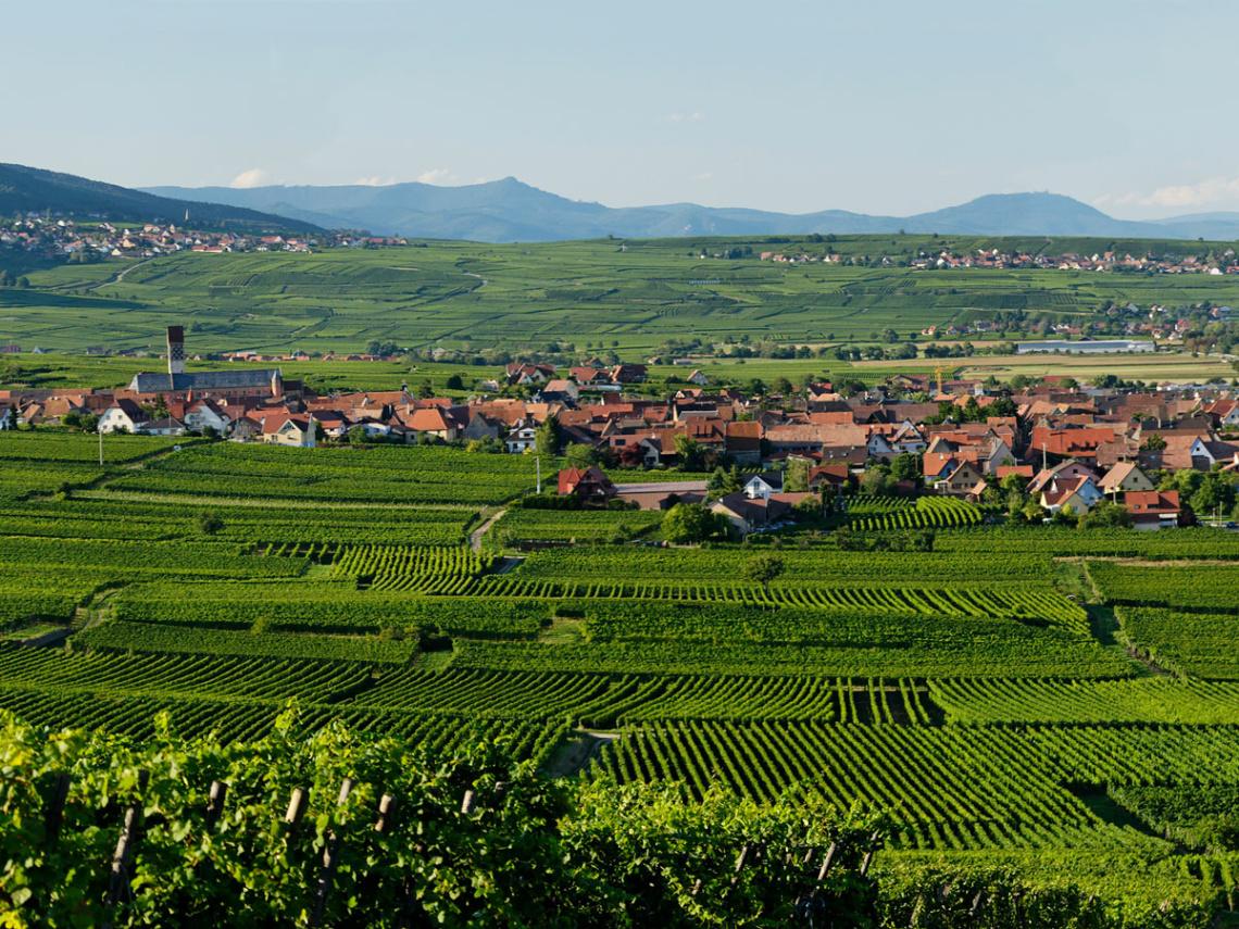 Weinabo-Abothek-Frankreich-Pfaffenheim-Elsass-Moltes-1200x900